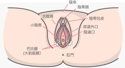 """让她淫液横流阴蒂高潮,""""阴部口交""""的8个实用舔阴技巧"""